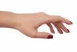 Женская изящная рука