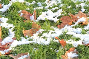 Neve su un prato e le foglie di un parco