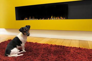 foyer à gaz fermé avec chien