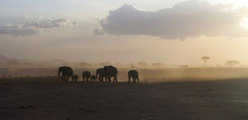 African elephants running at sunset, Kenya