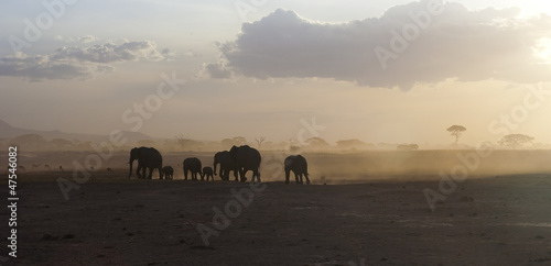 African elephants running at sunset, Kenya