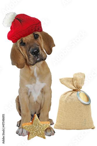 Broholmer Welpe wünscht frohe Weihnachten