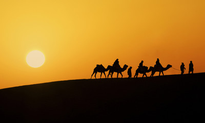 Silhouette of a camel caravan in the desert of Sahara at sunset.