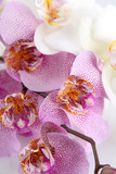 beautiful orchids, isolated on white