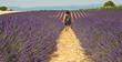 Provence - Enfant dans les champs de lavandes 2