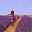 Provence - Enfant dans les champs de lavandes 3