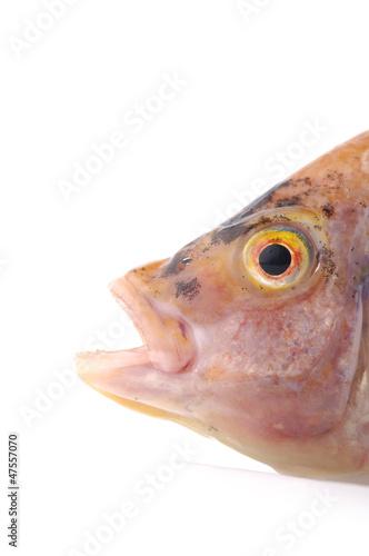 Macro of head of fish