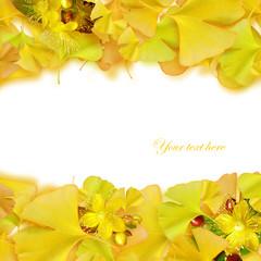イチョウと黄色い花