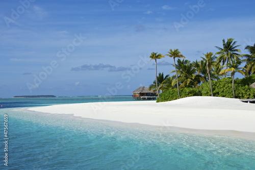 Fototapeten,strand,meer,sand,palme