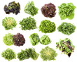varieties of salads