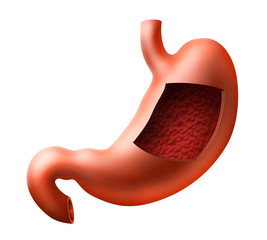 An illustration of human stomach with inside view