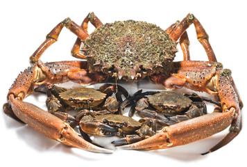 crayfish and crabs