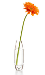 Beautiful gerbera in vase isolated on white