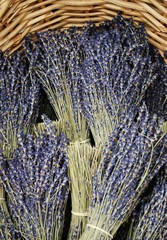 Dried lavender bunches in Provence, France