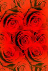 Sfondo di rose rosse e glitter