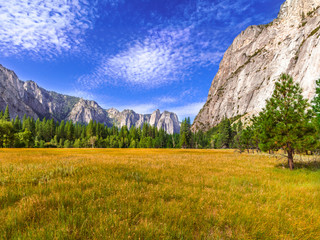 Yosemite Valley Meadows