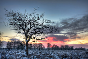 Lonely tree on moor in winter just before sunrise