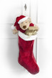 christmas sock with teddy bear and gifts