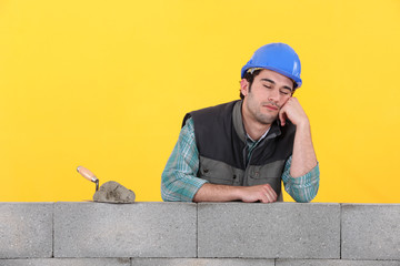 Mason asleep on top of wall
