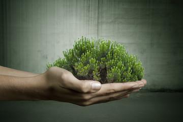 mano con ramas de árbol
