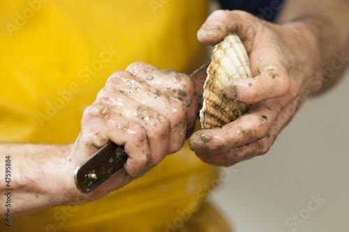 hands of fisherman preparing a scallop