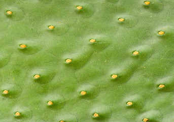 Closeup green cactus pattern without needles