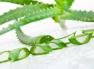Green fresh aloe vera leaves