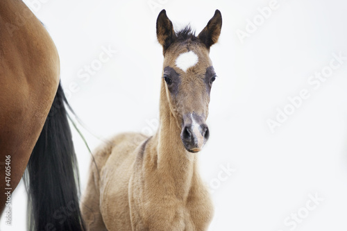 foal near his mother