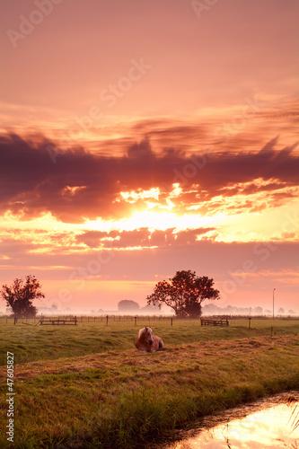 horse on Dutch pasture at sunrise
