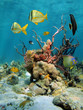 Colorful underwater scenery with corals and sea sponges