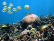 Shoal of butterflyfish above a coral reef