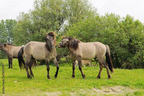 Fototapeten,pferd,pferd,wild,natur