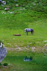 Cavalli pascolo brado, Prato Nevoso, Cuneo