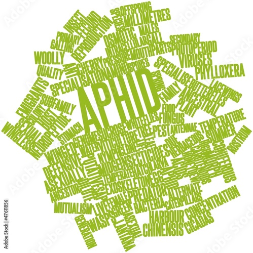Word cloud for Aphid