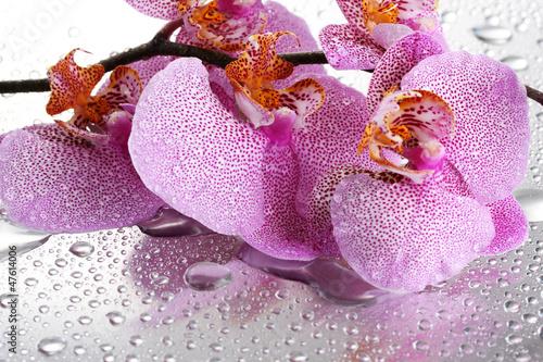 Fototapeten,rosa,schön,orchidee,fallen aufsteigen