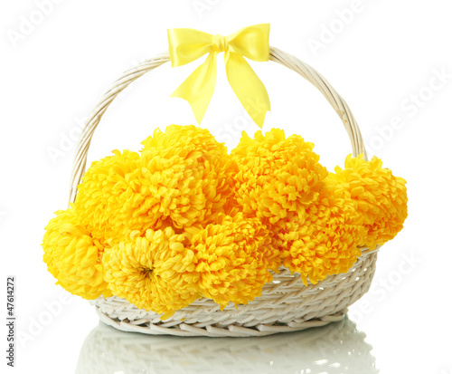 bright yellow chrysanthemums in basket, isolated on white