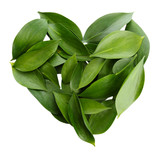 Fototapety heart of beautiful green leaves, isolated on white