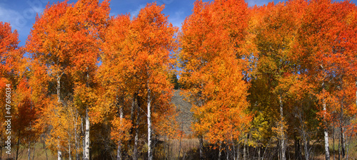 Bright colored autumn trees at its peak