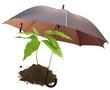 concept protection nature, écologie, environnement
