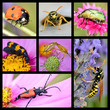 Seven photos mosaic of insects