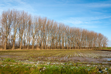 Row of bare trees in autumn