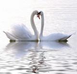 Fototapeta ptactwo - spokojny - Dziki Ssak