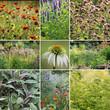 Kräutergarten - Kräuter Collage