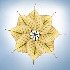 Fresh, new & bright peepal(pipal) leaves arranged in circular fa
