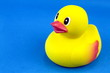 Yellow rubber duck on blue background.