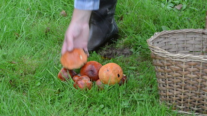 wicker basket orange red cap mushrooms