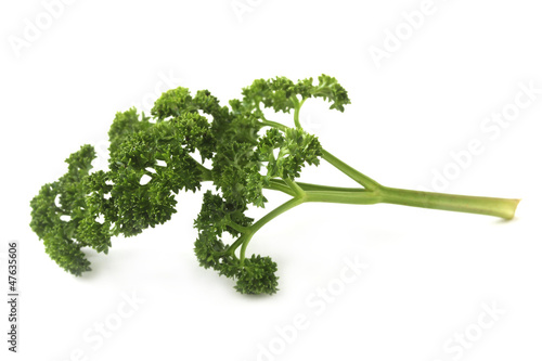 Fresh leaf of garden parsley(Petroselinum crispum) on white back