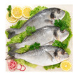 Orate - Fish sea bream