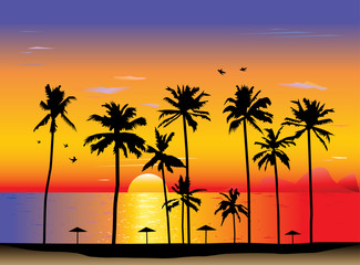 Tropical sunset or sunrise. Vector illustration
