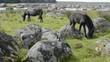 Pferd mit jungen Fohlen